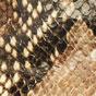 Embossed snake