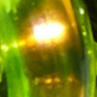 Iridescent Green
