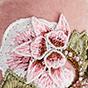 Blush Velvet