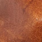 棕褐色 / 透明
