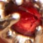 14k Gold Vermeil / Garnet