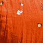 樱桃色组合