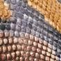 灰色 / 蛇纹