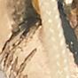 Gold Shells / Beige